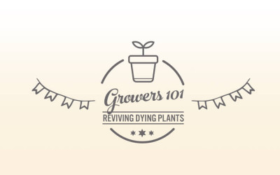 Growers 101 – October 2015