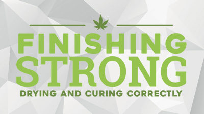 Finishing Strong – Drying and Curing Correctly