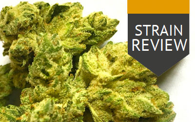 Strain Review – Gorilla Glue