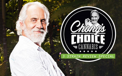 Strain Review – Chong's Choice Cannabis 3 Strain Review Special