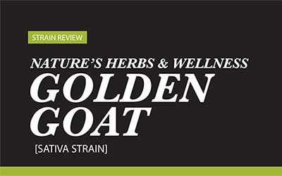 Strain Review – Golden Goat