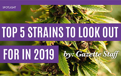 Top 5 Strains To Look Out For In 2019