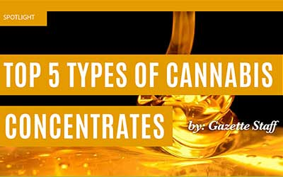 Top 5 Types Of Cannabis Concentrates