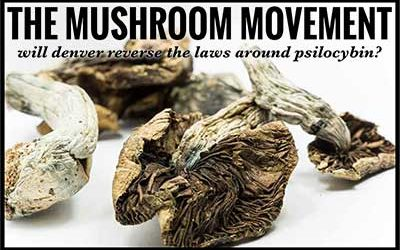 THE MUSHROOM MOVEMENT – will denver reverse the laws around psilocybin?