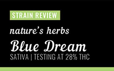 Strain Review – Blue Dream