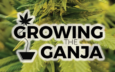 Growing The Ganja – Time To Veg Out